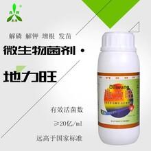 百香果疫病怎么治靓果安厂家直营河南鹤壁图片