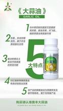白芨根腐病有效防治方法青枯立克图片