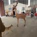 名圖玻璃鋼雕塑玻璃鋼動物造型,江門玻璃鋼動物雕塑造型美觀