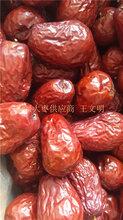 好吃新疆红枣山东批发厂家图片