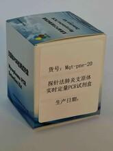 肺炎支原體探針法實時定量PCR試劑盒圖片