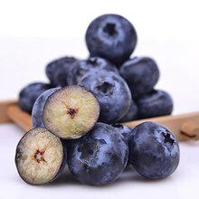 加拿大进口蓝莓酒食品报关公司