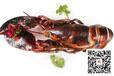 加拿大龙虾馋猫解馋系列—龙大