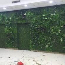 北京哪里有植物墙仿真植物墙做法及价格