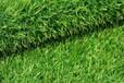 北京哪里有卖仿真草坪价格人造草坪出售