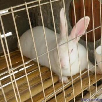 种兔养殖场