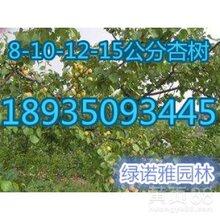 5公分薄皮核桃树哪里有?5-8公分核桃树产地批发价格图片