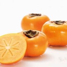 今年日本脆甜柿子多少錢一斤脆甜柿子產地批發價格圖片