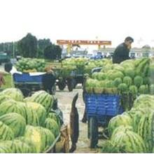 现在哪里的西瓜大量上市了哪里有大量西瓜河南