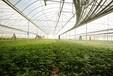 智慧农业种植找卓振智能,卓振智慧农业大棚种植系统,物联网农业应用领先厂家
