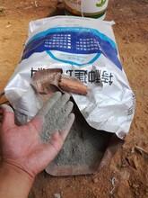 預應力管道壓漿料后張拉橋板壓漿料專業生產廠家供應圖片