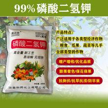 快速补充水稻所缺的磷钾元素磷酸二氢钾高含量易吸收厂家批发图片