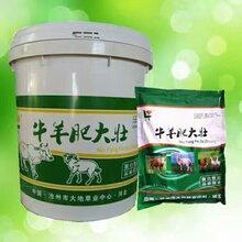 育肥牛专用牛羊猛长素育肥牛羊饲料预混料牛羊肥大壮图片