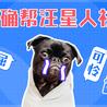 宠物为什么有臭味?宠友们要慎用宠物除臭剂!