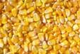 供应山西玉米粒水分14容重680