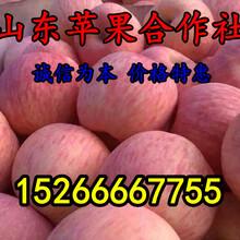 供应苹果价格表