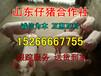 猪苗养殖-重庆最新仔猪价格-猪苗价格行情及趋势