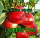 今年青海油桃哪里便宜-青海最新油桃价格-油桃行情及趋势