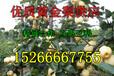 黄金梨哪里品种好最新贵州黄金梨价格黄金梨行情及趋势