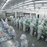 装修哪家比较专业,深圳平湖服装厂装璜公司图片