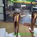 厂家定制不锈钢花盆欧式拉丝钛金金属花盆金属工艺品定制