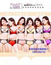 台湾省向大大代理价格
