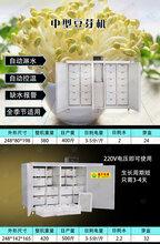 唐山熱銷豆芽機不銹鋼豆芽機質量十年保修圖片