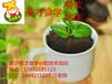 供应:万元创业,小本创业,奶茶创业,甜品创业