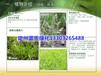 草本花卉盆栽花卉石竹带盆花卉假龙头松果菊价格