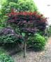 绿化养护管理上海厂区绿化养护虹口区盆景苗木直销艾兰绿化供图片