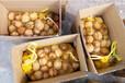 农丰八百亩薄皮鲜核桃,脱皮青核桃,白菜价出售了