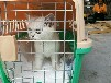 宠物出国回国,猫狗出国回国,到台湾,香港澳门宠物出入境