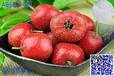 熱門草莓味飲料香精留香草莓味液體香精加工