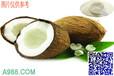 广东香精厂家批发椰子香精耐高温烘焙香精香气持久浓度高