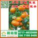 恩施特早蜜橘专业代办,恩施市那里有中熟密橘代收电话150-9089-8009