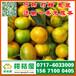 济宁迟熟密橘销售电话150-9089-8009微山那里有迟熟密桔价格行情