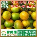 金乡特早密橘产地电话150-9089-8009济宁特早密橘批发价格