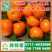 聊城临清特早柑橘销售电话150-9089-8009批发市场