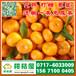 济宁迟熟密橘销售电话150-9089-8009汶上迟熟密橘销售价格