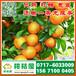 济宁兖州晚熟柑子代办价格,济宁那里有早熟橘子代办