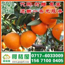 宜昌三峡物流园特早蜜桔来源产地_三峡物流园早熟蜜橘蔬菜水果图片