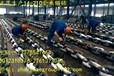 江苏镇江正茂集团生产12.5-210毫米有档锚链