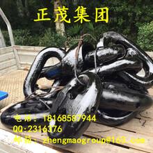 山东青岛厂家供应锚链附件,肯特卸扣,末端卸扣90毫米,各种船用锚链