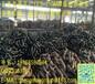 江苏正茂集团生产有档锚链68毫米,最大可到210毫米