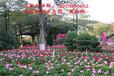 惠州拓展培训、亲子游、农家乐体验、就去松湖生态园