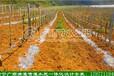 广西南宁广顺农业现代化滴灌喷灌水肥一体化节水灌溉工程设计安装科技