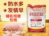 中草药哺乳母猪预混料绿色无抗母猪饲料