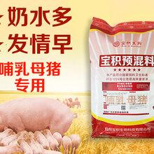 中草药哺乳母猪预混料绿色无抗母猪饲料图片