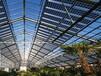 太阳能光伏蔬菜温室大棚