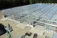 新疆地区连栋智能温室工程建设方案